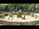 271 Вьетнам ДАЛАТ НАЦИОНАЛЬНЫЙ ПАРК ПРЕНН прогулка по ПАРКУ Vietnam Da Lat Prenn National Park walk