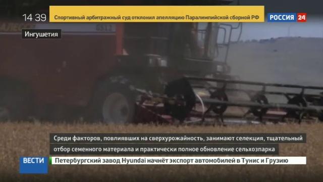 Новости на Россия 24 • Ингушетия вышла в лидеры на Северном Кавказе по росту урожайности зерновых культур
