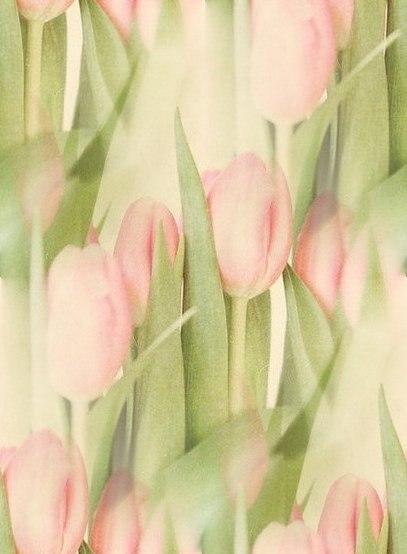Цветочные и растительные фоны - Страница 3 RqabGcUrkhk