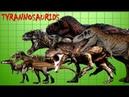 Tyrannosaur family species comparison
