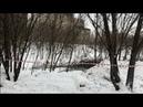 Вырубка деревьев на Новороссийской 25 к. 1 в Москве под видом ТПУ / LIVE 17.01.19