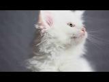 Милые котята __________________Армейский юмор Ржач Юмор Ржака хаха Приколы 100500 фильм гуф гриффины клип кино секс порно ххх разврат девочки угар ног