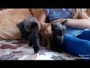 Эти маленькие, пушистые и милые комочки 😍ждут себе заботливых хозяев, к лоточку приучены, кушают самостоятельно 🐱 котятауфа ми
