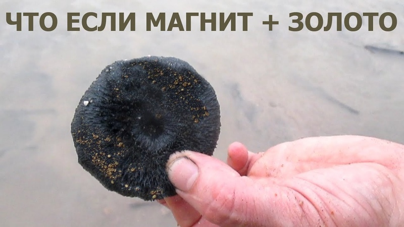 Добываем золото простым магнитом В любой стране в любом городе