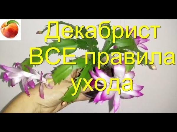 Декабрист Все правила ухода Секрет цветения Успеха Schlumbergera Почему не цветет Шлюмбергера кактус