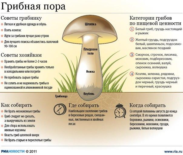 За грибами в лес