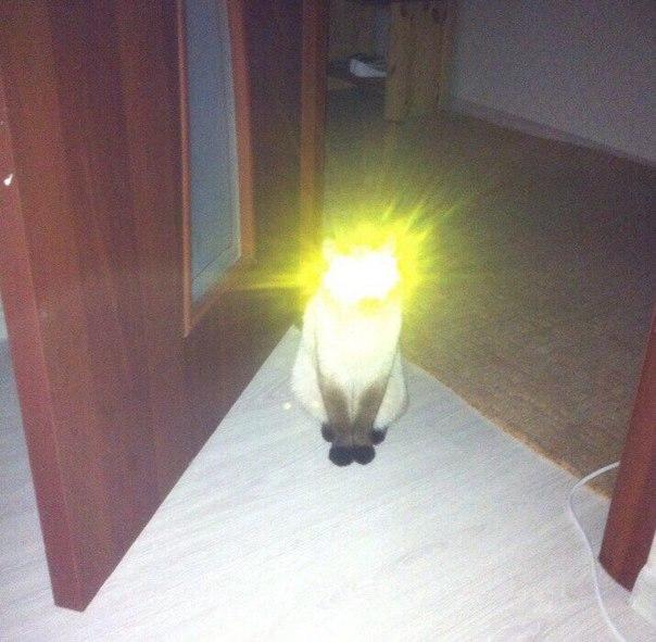Когда твой кот немножко квазар