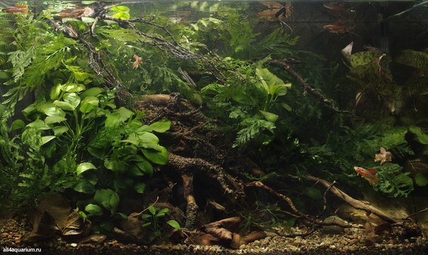 Конкурс дизайна биотопных аквариумов JBL 2014 57hPMrrEz7w