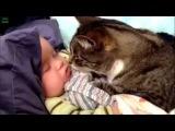 Приколы про детей   дети и животные