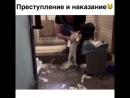 Преступление и наказание. Воспитание кота )