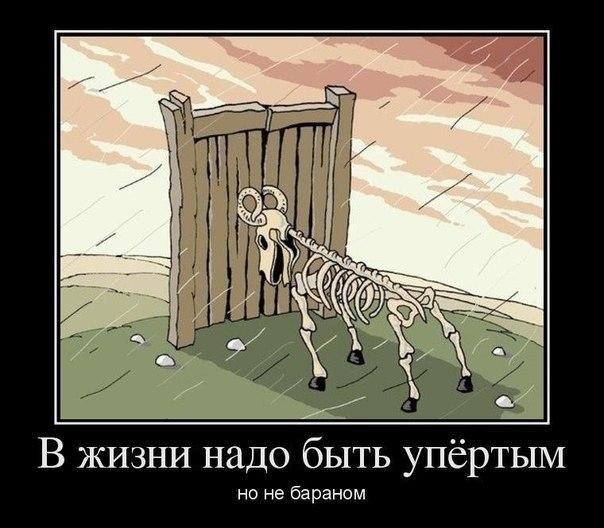 http://cs14102.vk.me/c313231/v313231817/2240/Ors3jSRh2p4.jpg