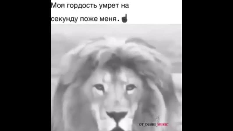 ~львы сильнее псов💪