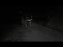 3 видео из п шепси ЕНОТЫ