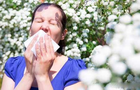 Прополис может быть использован для уменьшения симптомов сезонной аллергии.