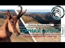 ГОРНАЯ ОХОТА НА ПИРЕНЕЙСКУЮ СЕРНУ Mountain hunting in Spain pyrenean chamois