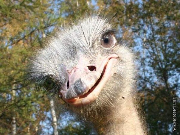 Смешные животные photo