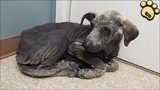 Rescue A Poor Dog Who Is Physical And Emotional Wreck
