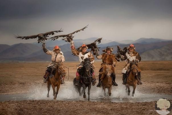 В степях и пустынях Монголии.