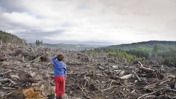 Надо приехать в Сибирь, чтобы увидеть своими глазами, действительно ли весь лес здесь хищнически пилится и вывозится в Поднебесную.