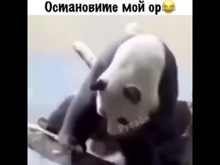 Хорошенькая панда