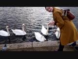 Round Pond in Kensington Gardens, London, UK