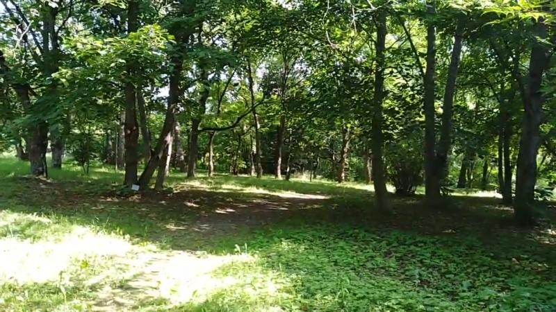 Лес бархата амурского