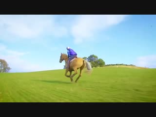 Horse vs Cycle