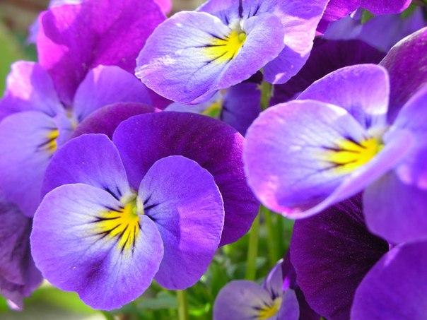 Красивые цветы и растения vk