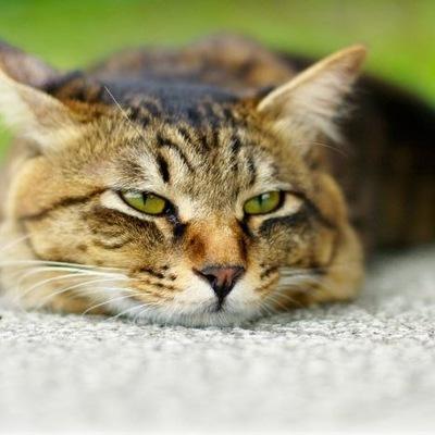 Коте Под-Наркоте