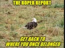 The Roper Report (TRR): Get Back To Where You Once Belonged