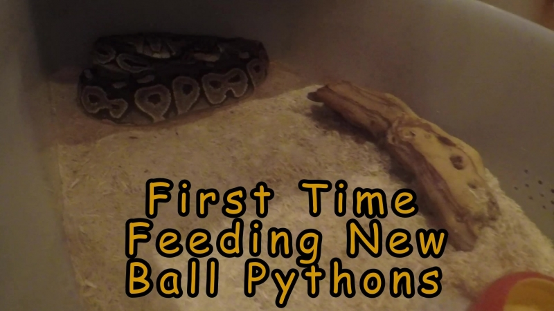 First Time Feeding New BP