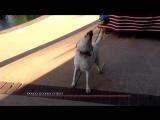 Doggo: Goodest of Boys