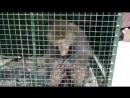 Контактный зоопарк в Орше