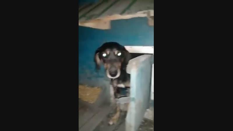Собака открывает и закрывает дверь Открой дверь Закрой Дверь