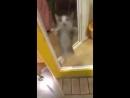 Еврейский кот