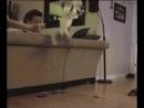 Лучшие видео приколы смешные свежие подборка новинки самые топ смотреть интересно смех веселая животные котики 2019   Fun Gifs .