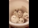 Котята в тазике
