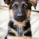 Зоологи выяснили, что в организме собак и их хозяев, смотрящих друг другу в глаза…