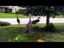 Huge Birds Have Confrontation With Stray Cats With Unexpected Results