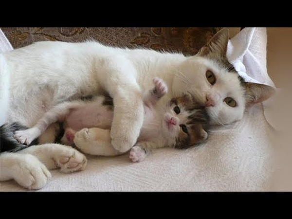 Mother Cats taking care and Protecting their cute Kittens safety - Mom cat and Kitten Compilation