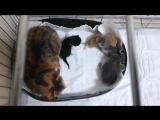 Тайра с котятами