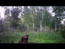 а это ребятню свою вывела фотоловушка в лесу