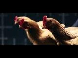 Реклама подвески Мерседес Танцующие Курицы  Mercedes Benz commercial Dancing chicken Stability