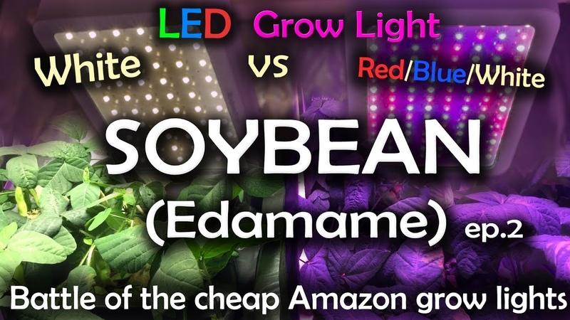 White LED vs Red Blue White LED Grow Test wTime Lapse - Soybean Ep.2 *Read Description