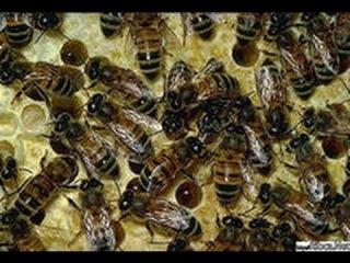 Забавные насекомые. Жуки, червяки, тараканы