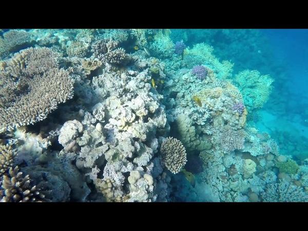 Egypt(Hurghada) - Mahmya (Giftun island) Snorkel