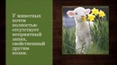 Зааненские козы. Описание породы.