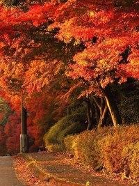 Отцвели цветы, падают листья, птицы молчат, лес пустеет и затихает.ОСЕНЬ. - Страница 6 WqZtzSh7Q_8
