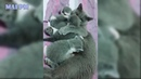 Animal Moms Protecting and looking out for their babies safety Videos Compilation