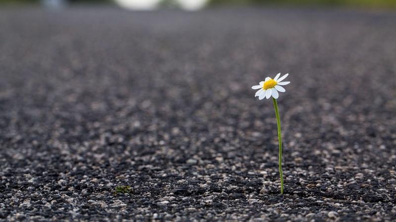 Картинка цветок. Макро, цветок, дорога, цветок у дороги.